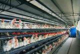 As aves domésticas da construção de aço abrigam com os painéis do telhado e de parede