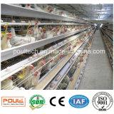 Het Systeem van de Kooi van het Landbouwbedrijf van het gevogelte