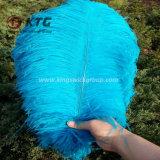 I capelli Colourful dello struzzo, piume tinte dello struzzo della piuma per il carnevale Costumes la decorazione