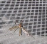 Schermo decorativo della finestra della mosca della vetroresina dello schermo della finestra della vetroresina