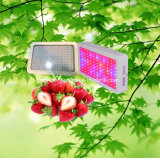 o mini diodo emissor de luz 135W cresce claro para plantas internas