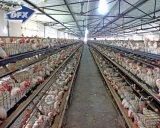 Diseño automático prefabricado de la casa de parrilla de la vertiente del pollo del edificio de la granja avícola de la estructura de acero