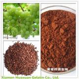 Reiner natürlicher materieller Trauben-Startwert- für Zufallsgeneratorauszug 95% UV