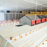 Selezionatore automatico che alza strumentazione per la Camera di pollicultura