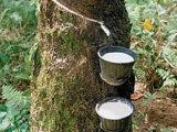 自然な乳液の生産のための良質ディスク遠心分離機
