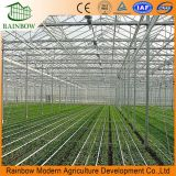Vegetable를 위한 농업 Steel Structure PC Sheet Greenhouse