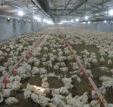 판매를 위한 직업적인 큰 닭장