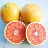 Extrait Hesperetin90% 95%98%Supplement, Hesperetin d'Aurantium de citron