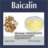 ベストセラーの黄色い粉のプラントエキスBaicalin CAS: 21967-41-9