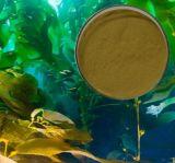 Extracto de algas marinhas para matérias-primas para suplementos alimentares e suplementos