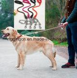 مرود خابور محبوب خطة كلاب في [سّ316] [متريلس]