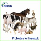 Превосходные питания Paracasei Probiotics лактобациллы качества животные