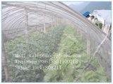 Сельскохозяйственных против насекомых-Net для фруктов и Anti-Insect Anti-Bird