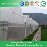 Film PE Multi-Span Green House pour l'agriculture/commercial