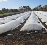 Tissus protégés UV non tissés PP pour l'agriculture et la protection des cultures