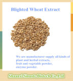 Fabricant Blighted Wheat Extract Powder 10: 1 20: 1