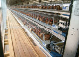 Le meilleur modèle de vente de Chambre de cage/ferme avicole de poulet d'oeufs de couche