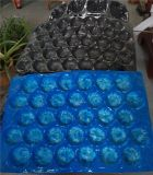 Boîte d'emballage en plastique transparent APET / PVC / PP