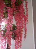 居間は鉢植えなピーナツ木を飾った