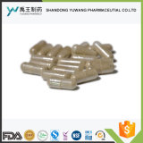 Produtos à base de plantas suplemento alimentar cápsulas de extrato de grãos de café verde