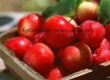 Extrait de la poudre d'Apple polyphénols&proanthocyanidine Service OEM