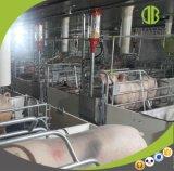 Горячий DIP оцинкованных Pig сельскохозяйственного оборудования по ТЗ Farrowing ящик с хорошей ценой