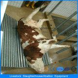 Macchina automatica di macello per il bestiame maiale e pecore del pollo nella Camera del pollame