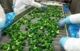 IQF замороженных брокколи для экспорта