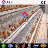 ISOの証明書の鶏の層の養鶏場
