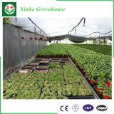 Xinhe-- Invernadero de la hoja de la PC con alta calidad y precio favorable