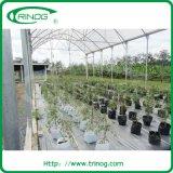 Nam Flower Greenhouse voor de markt van Kenia toe