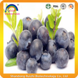 Extracto de Blueberry Blue Blue Berry Extract