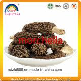 채소 버섯 Morchella 고품질 상품
