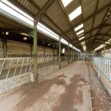 Structure en acier de l'industrie d'alimentation de la vache hangar avec un design moderne