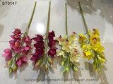 Cymbidium Орхидея в Тяньцзине Уотсон подарки Co Ltd