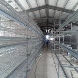 Compartimento da camada de pintos/ Casa de frango Hot Vender Qualidade Alta
