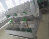 Jaula del conejo del equipo de granja del conejo con la posición de 12 madres