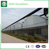Intelligent Multi Span Film Green House