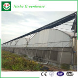 Estufa comercial da película plástica da estufa do túnel para o crescimento do tomate