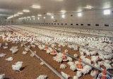 Parrilla y pequeño del pollo sistema de la litera profundamente para la granja avícola