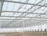식물성 온실을%s Venlo 폴리탄산염 장 온실