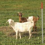 Galvaznied обернуло загородку скотоводческого хозяйства провода, котор хранят