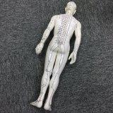 Completamente modello di Acupunctue del corpo per studiare