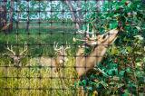 사슴 담 그물세공 또는 사슴 정지 그물세공 사슴 담