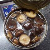 Strisce inscatolate del fungo di Shiitake