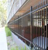 L'exportation en acier galvanisé Palissade/clôture en fer forgé/JARDIN CLÔTURE/clôture en fer ornemental
