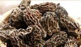 Os melhores cogumelos morel Morchella secas