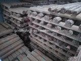 농업을%s 광동 대나무 생산