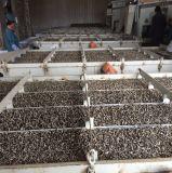 Heiße verkaufende neue Getreide-erstklassige Qualitätsgrosse Größen-Sonnenblumensamen