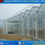 Chambre verte en verre de culture hydroponique de grande taille commerciale pour la tomate